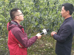 江津花椒出现新品种 亩产3000斤香味多达90种