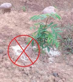 建议科学施肥提高花椒品质和产量